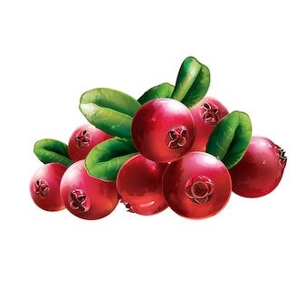 Красная клюква с листьями