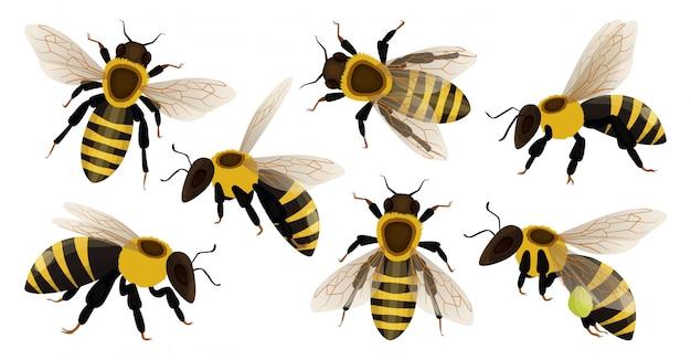 Медоносная пчела изолированные мультфильм установить значок.