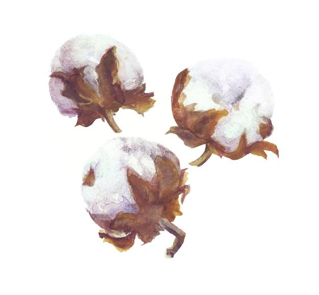 コットンボール水彩画支店と花輪の絵。手描き植物セット