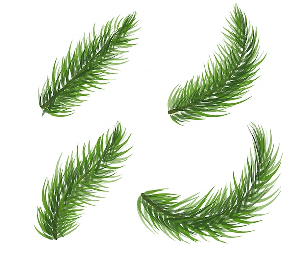 松の木の枝のセット。モミの木クリスマスリース要素。白い背景の針葉樹のアイコンのコレクション。