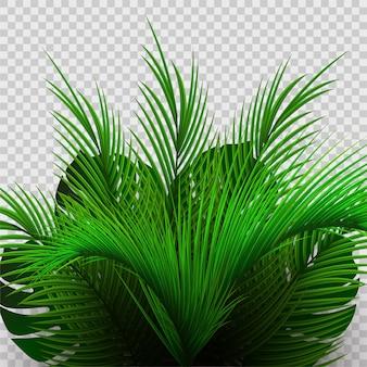 透明に分離された熱帯のヤシの茂み