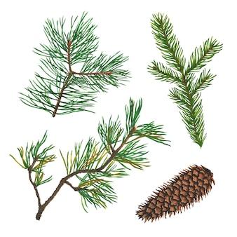 スプルース、モミ、松またはクリスマスツリーの枝とコーンの水彩イラストのセット