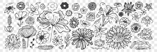 Рисованной цветы каракули набор.