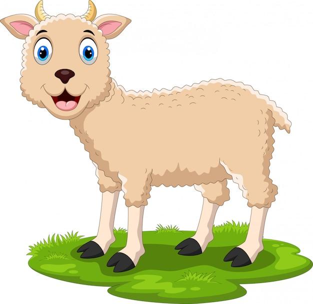 Милый мультфильм овец