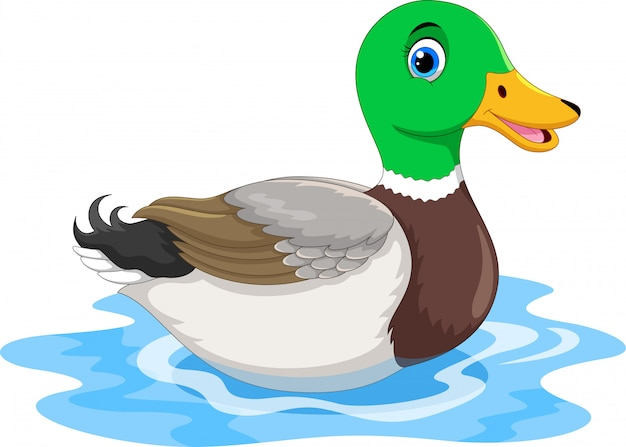 Милый мультфильм утка плавание