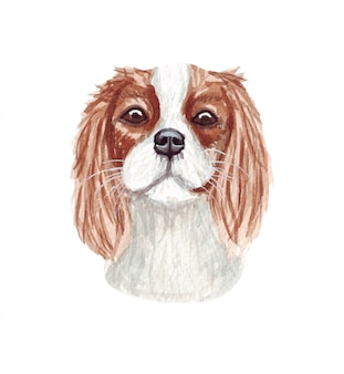 Акварельные иллюстрации смешные собаки. популярная собака породы. дог кавалер кинг чарльз спаниель. ручной персонаж, изолированный на белом