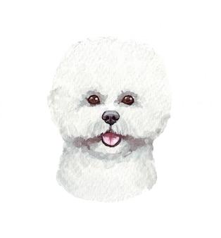 Акварельные иллюстрации смешные собаки. популярная собака породы. собака бишон фризе. ручной персонаж, изолированный на белом