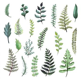 シダの水彩イラスト。植物のクリップアート。緑の葉、ハーブ、枝のセット。花のデザイン要素。