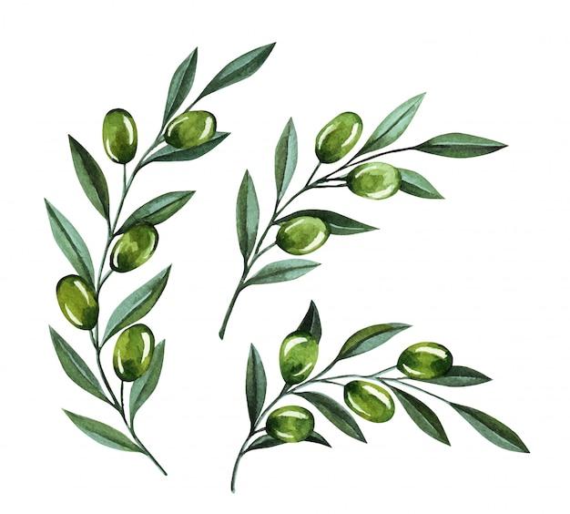Акварельные иллюстрации с оливковыми ветвями и ягодами. цветочные иллюстрации для свадебных стационарных, поздравления, обои, мода и приглашения.