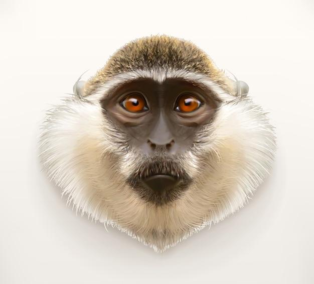 猿の頭、リアルなイラスト
