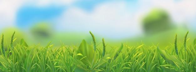 春の風景。緑の草の図