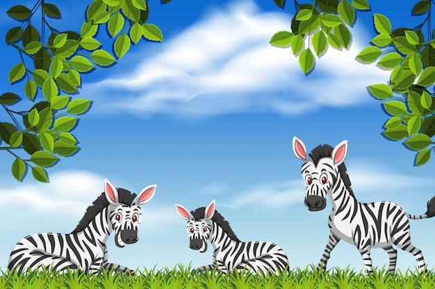 Зебры в природе сцены