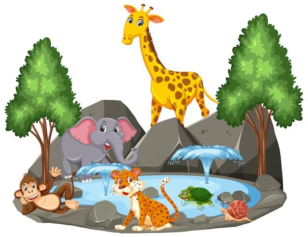 池のそばの野生動物の背景シーン