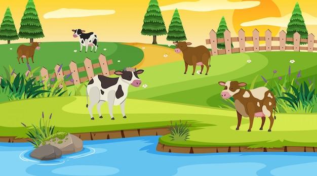 フィールドで牛とのシーン