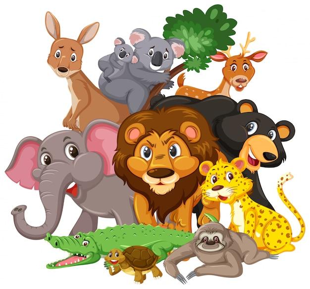 Разные виды диких животных