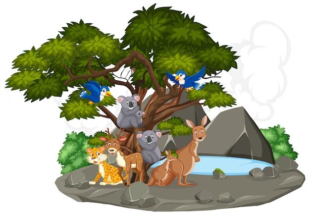 Сцена с дикими животными у маленького пруда в лесу