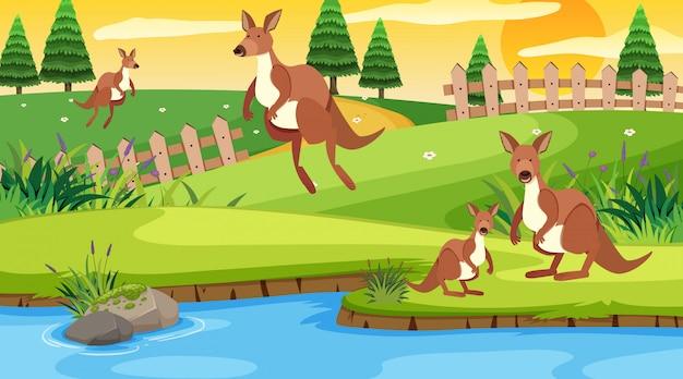カンガルーが公園でジャンプするシーン