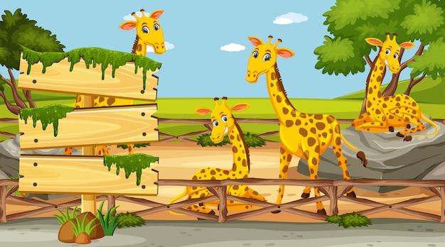 Деревянный знак шаблон с четырьмя жирафами в парке
