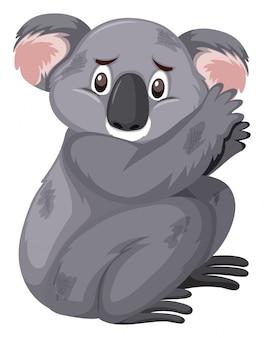 Грустно выглядящая коала на белом