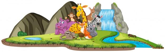 昼間の滝のそばに多くの動物がいるシーン