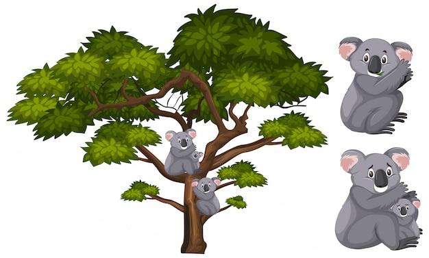 大きな緑の木と枝のコアラ