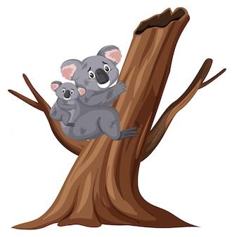 白で木に登って負傷したコアラ