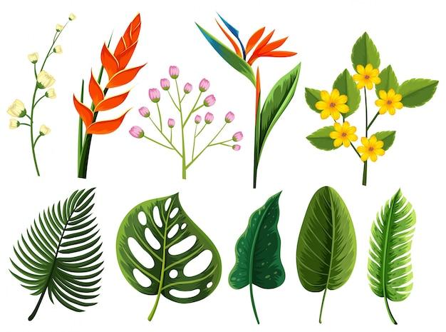 異なるタイプの花と葉