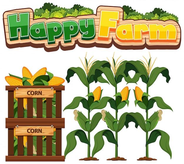 白い背景の上に新鮮なトウモロコシと幸せな農場のフォントデザイン