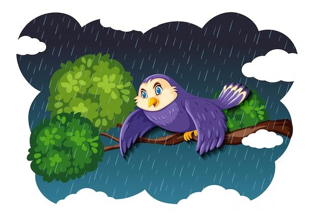自然の雨のシーンの鳥