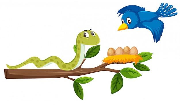 木の枝と鳥の上のヘビ