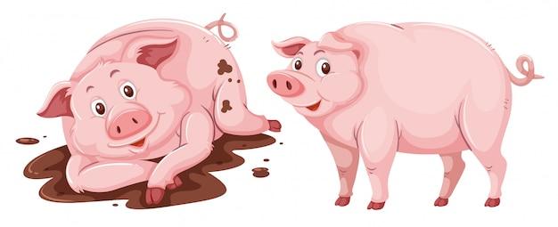 白い背景に豚