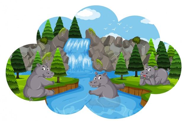 水中で遊ぶカバ