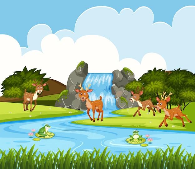 滝の中の鹿シーン