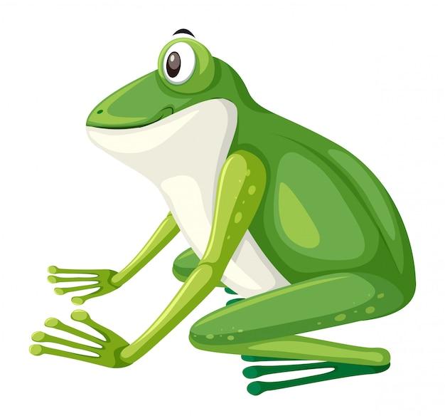 緑色のカエルの側面図