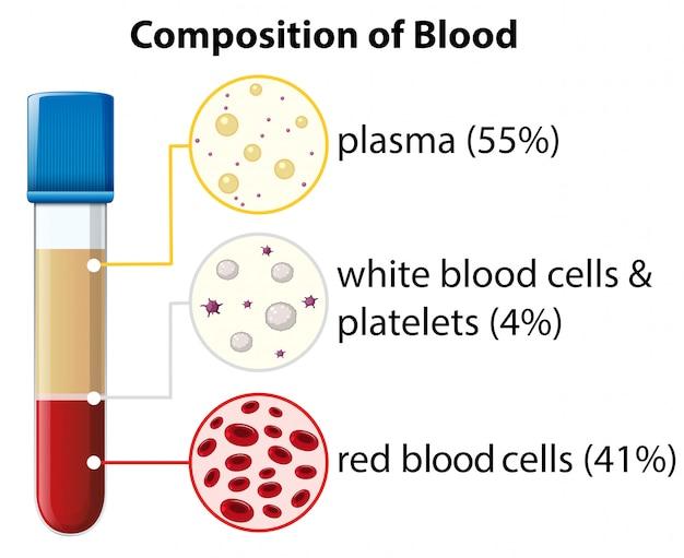 Состав диаграммы крови