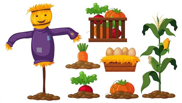 農産物のセット