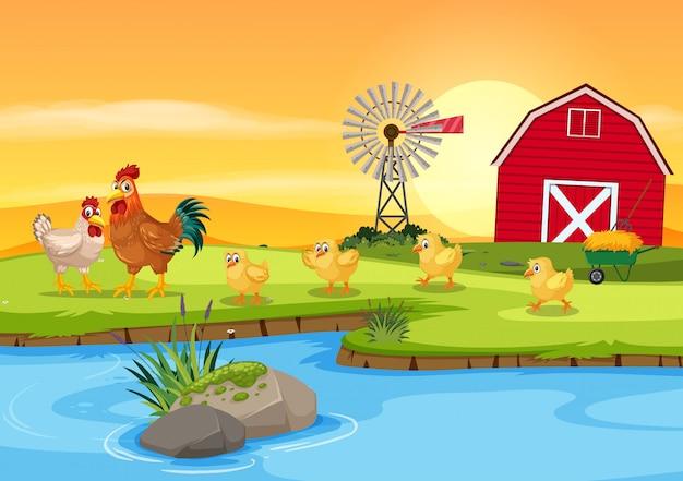 農場で鶏の家族