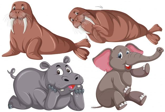 動物キャラクターのセット