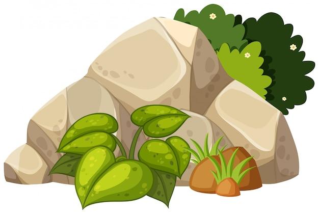 白い背景の上の自然の岩