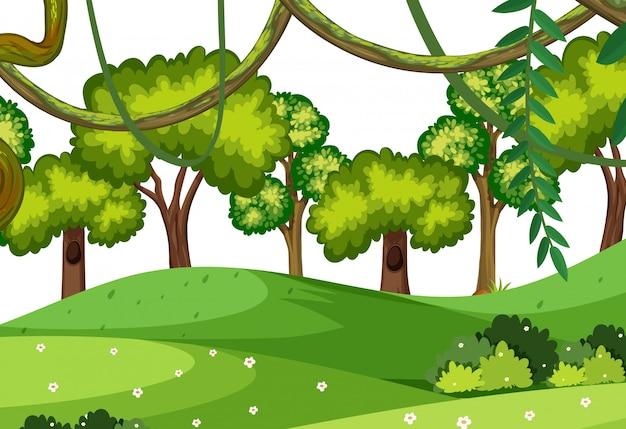 自然林のイラスト