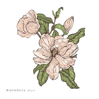 Рука рисовать магнолии цветы иллюстрации. цветочный венок. ботаническая цветочная открытка на белом фоне.