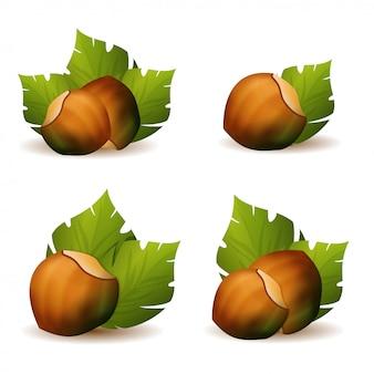 Фундук с зелеными листьями набор иллюстрации