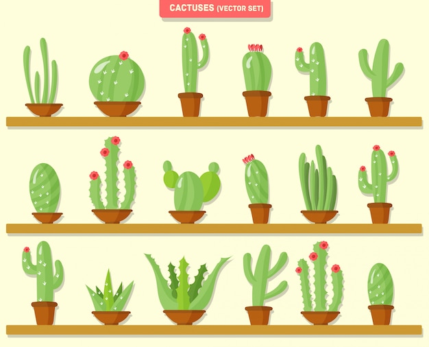 Домашние тропические растения, кактусы в горшках, цветы, природа.