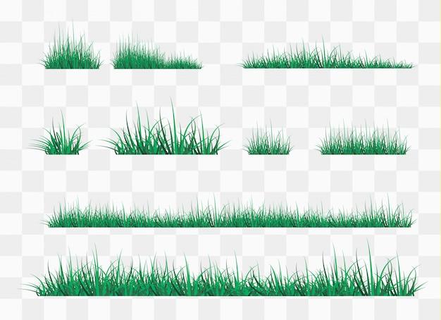 森の空き地の緑の草、