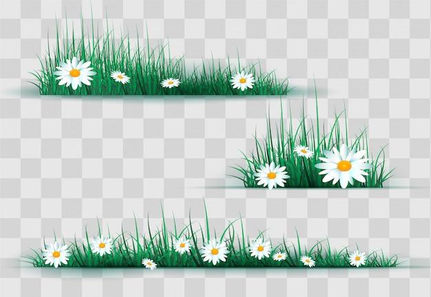 鎮静と緑の芝生の空き地