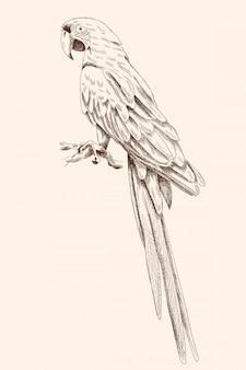 Большой попугай ара сидит на ветке со сложенными крыльями.