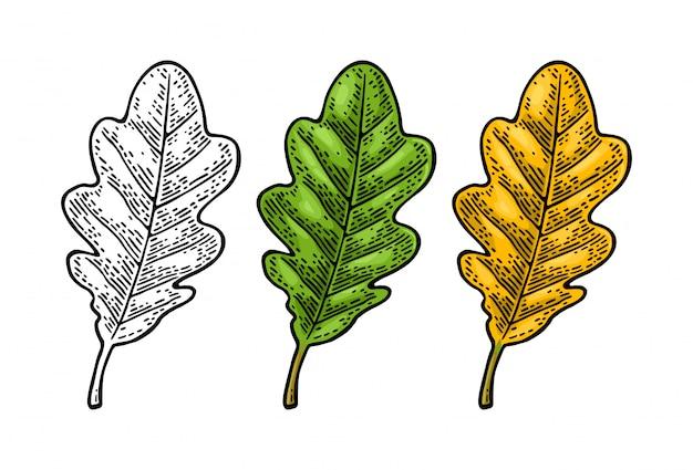 Дубовые листья установлены