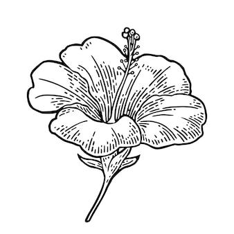 ハイビスカスの花。黒白い背景の上のヴィンテージのイラストを彫刻
