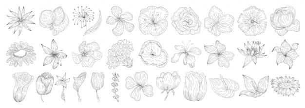 花の装飾セット。ハーブと野生の花。