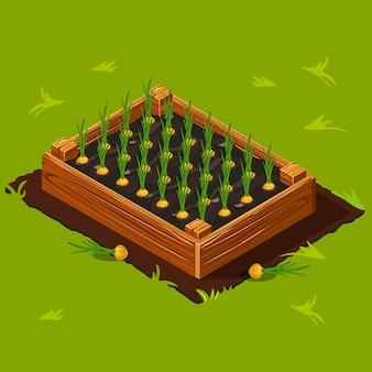 タマネギと野菜の庭の箱